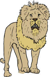 A lion facing forwards